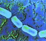 microscopic photo of bacteria